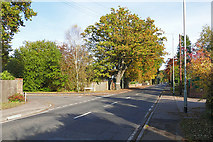 SU8064 : Nine Mile Ride, Finchampstead by Alan Hunt