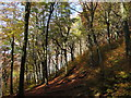 ST1382 : Wooded hillside near Castell Coch by Gareth James