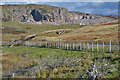 NY5507 : View towards Shap Pink Quarry by Nigel Brown