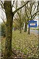 NZ1249 : Trees alongside Delves Lane by Trevor Littlewood
