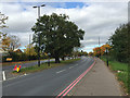 SP3780 : Former hedgerow oaks in the central reservation of Clifford Bridge Road, Walsgrave, Coventry by Robin Stott