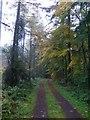 NZ1990 : In Blubbery Wood by Russel Wills