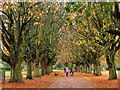 SP5304 : Avenue of horse chestnut trees in Florence Park by Steve Daniels