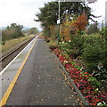 SO0291 : Flowerbed on Caersws railway station by Jaggery