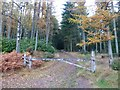 NU0503 : Track in Primrose Wood by Russel Wills