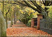 J3673 : Autumn leaves, Cyprus Avenue, Belfast (November 2015) by Albert Bridge
