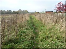 NY4057 : Public footpath to Tarraby Lane by Christine Johnstone