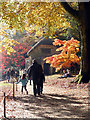 ST7734 : Stourhead Gardens - approaching the Gothic Cottage by Chris Allen