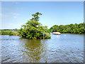 TG3116 : Island Between Wroxham Broad and the River Bure by David Dixon