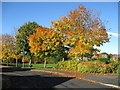 NZ1928 : Autumn colours, Barrington Meadows by Alex McGregor