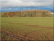 NZ2119 : Crop field towards Willow Beds Woodland by JThomas