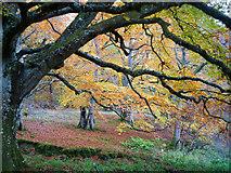 NH5857 : Close to the lochan in Drummondreach Oak Wood by Julian Paren