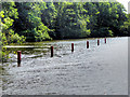 TG3215 : River Bure near Entrance to Salhouse Broad by David Dixon