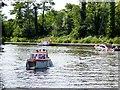 TG3115 : River Bure near Salhouse Broad by David Dixon
