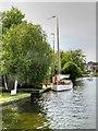 TG3017 : River Bure near Wroxham by David Dixon