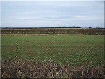NZ2308 : Narrow field south east of Barton by JThomas