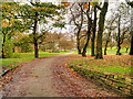 SD8203 : Path into Heaton Park by David Dixon