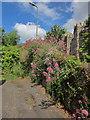SX9065 : Red valerian, Stantaway Park, Torquay by Derek Harper
