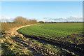 NZ2618 : Field on south side of Burtree Lane by Trevor Littlewood