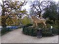 TQ3470 : Park Deer by Gordon Griffiths