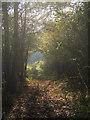 SS8677 : A footpath through trees at Merthyr Mawr Warren by eswales