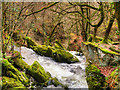 NY3804 : Looking Down Stock Ghyll Force by David Dixon