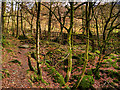NY3804 : Footpath in Stock Ghyll Woods by David Dixon