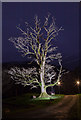 NN4719 : Lit tree in the grounds of the Monachyle Mhor Hotel by Doug Lee