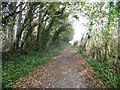 SY6592 : Bradford Peverell, permissive bridleway by Mike Faherty