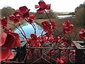 SE2812 : Poppies at the YSP! by Dave Pickersgill