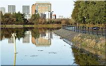 J3473 : The River Lagan, Ravenhill Reach, Belfast (November 2015) by Albert Bridge