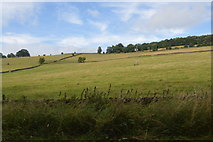 SK2376 : Sloping pasture by N Chadwick