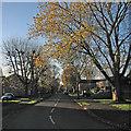 TL4756 : Lichfield Road: winter light by John Sutton