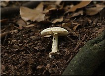 SX9065 : Mushroom, Chapel Hill Pleasure Grounds by Derek Harper