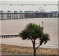 SH7882 : Palm Tree and Pier by Gerald England