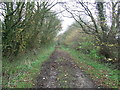 TL6356 : Icknield Way by Keith Evans