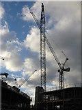 NT2970 : Cranes at Little France by M J Richardson