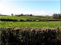 H7447 : Tannaghlane Townland by Kenneth  Allen