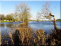 H7646 : Flooded land, Tullynashane by Kenneth  Allen