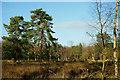 SU9955 : Prey Heath, Worplesdon by Peter Trimming