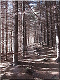 J3629 : Path leading up valley through the Donard Wood panhandle by Eric Jones