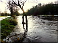 H4772 : Camowen River, Mullaghmore by Kenneth  Allen