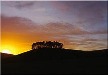 SE7296 : Hill Plantation, Rosedale by Ian Taylor
