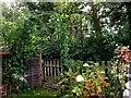 SU7582 : Henley-on-Thames, garden by Oxfordian Kissuth