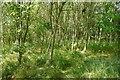 NO2503 : Woodland, Formonthills by Richard Webb