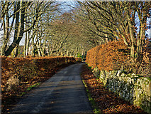 NH6454 : The road to Balnakyle, Black Isle by Julian Paren