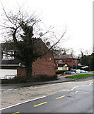 ST3091 : Ivy-clad tree on a Malpas corner, Newport by Jaggery