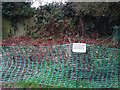 SK3516 : Japanese Knotweed in the Bath Grounds, Ashby by Oliver Mills