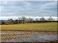 NZ2648 : Waterlogged field beside Beaney Lane by Trevor Littlewood