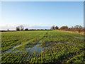 NZ2317 : Waterlogged field adjacent to B6279 by Trevor Littlewood